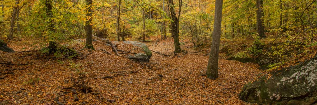 Shawnee National Forest Fall Colors in Southern Illinois